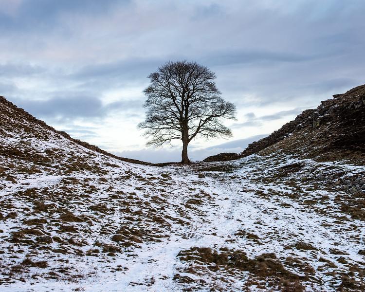 Winter on Hadrian's Wall at Sycamore Gap