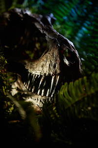 2019 UWL CSH T Rex Cover Dinosaurs