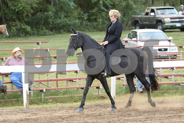 Ivanhoe-Gaited Classes-2013