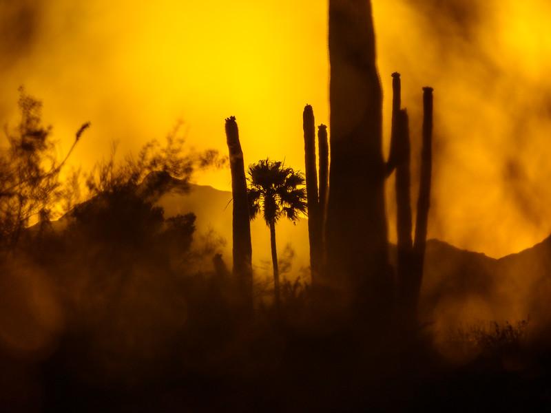 Eventide in Tucson, Arizona