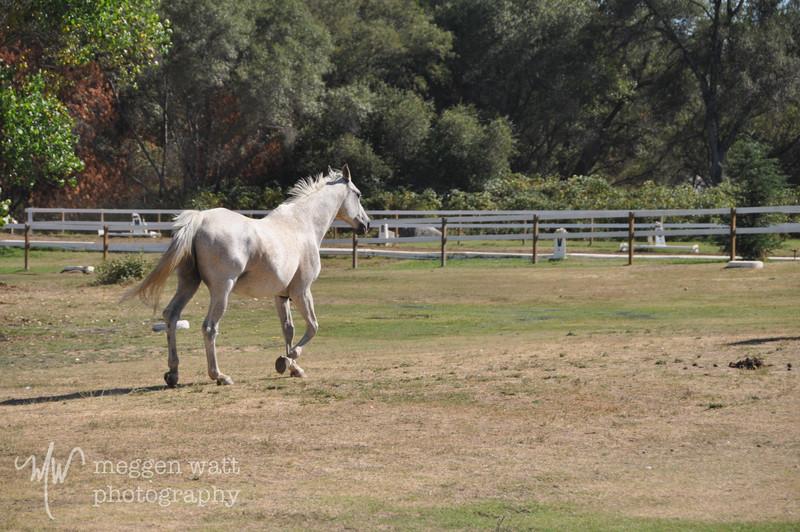 EB&Horses-117.jpg