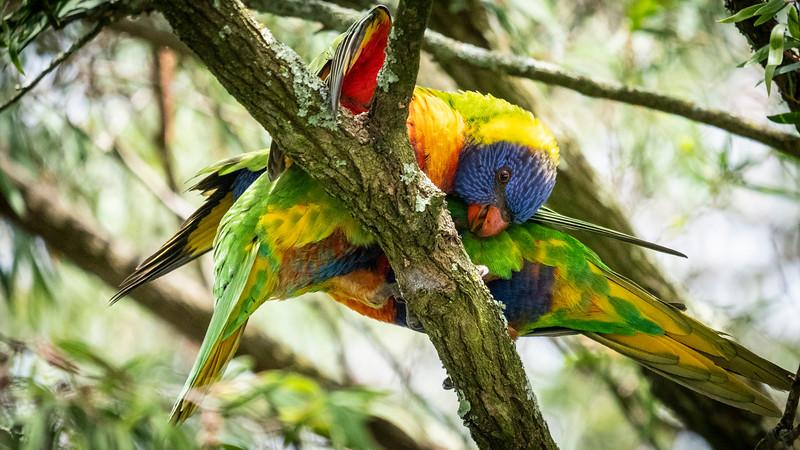 121818  birds  _25.JPG