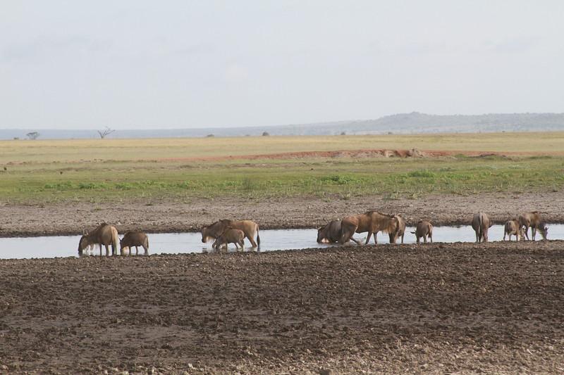 Kenya 2019 #2 2046.JPG