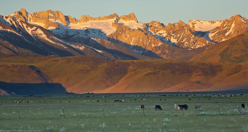 Pastures near Bridgeport