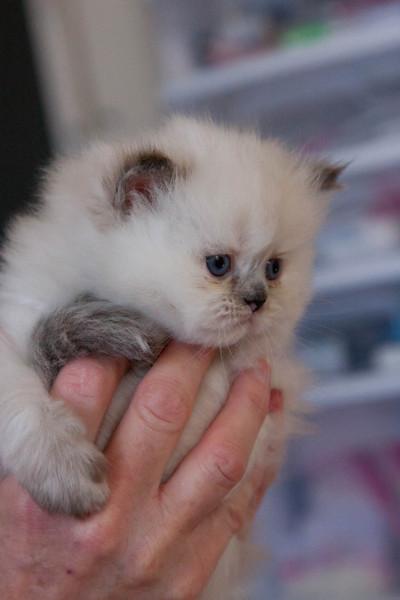 Himi_Kittens_Nov30-8227.jpg