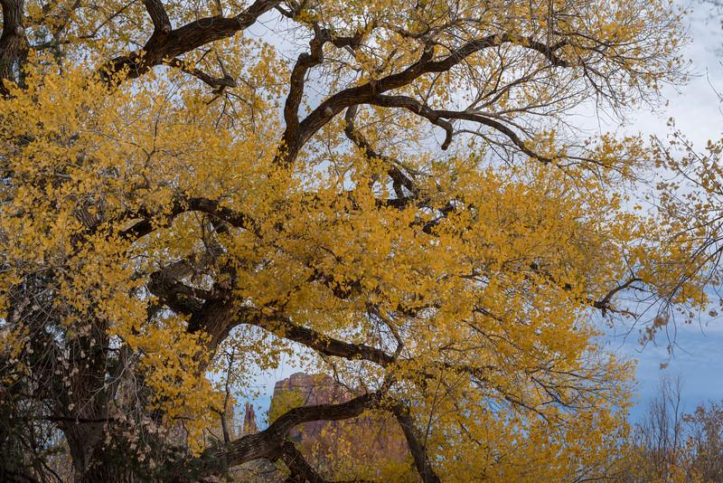Sedonaa Thanksgiving Fall (18).jpg