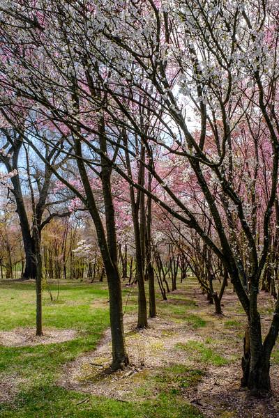 20190406 National Arboretum 032.jpg