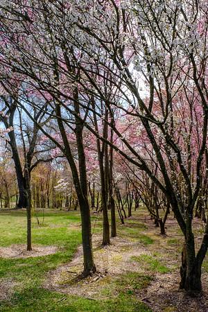 20190406 National Arboretum