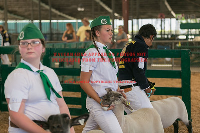 2017 Chino Fair - Master's Showmanship