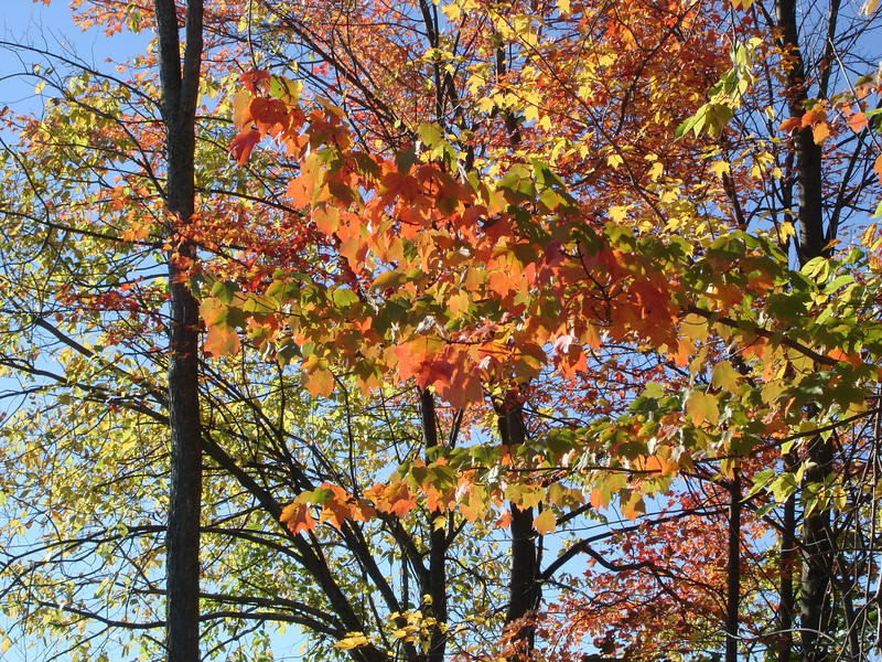 Oct07_AmesHillFoliage011.JPG
