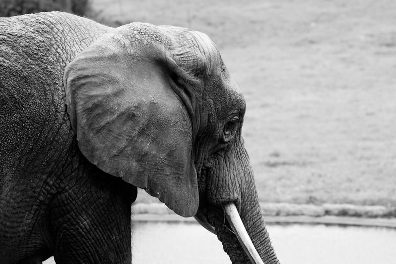 NC Zoo_51012375.jpg