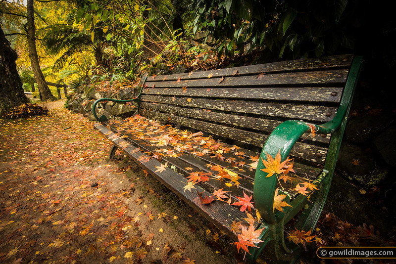 Park bench by the lake, Alfred Nicholas gardens