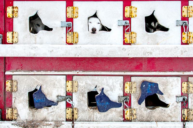 Dogs in their kennels at Dawson City, Yukon, Canada