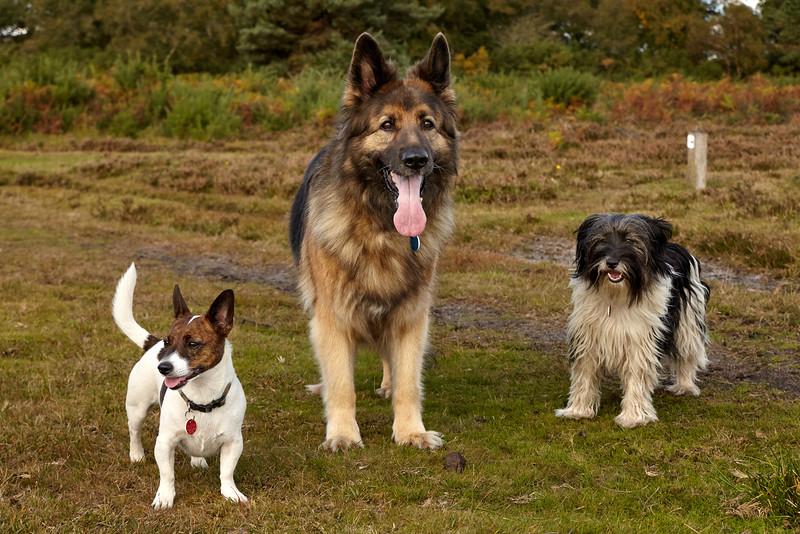 17_20161015_MH_Dogs.jpg