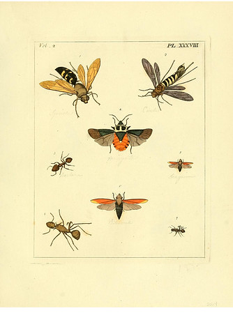 Vintage Insect Bookplate Scans (2 Megapixel)