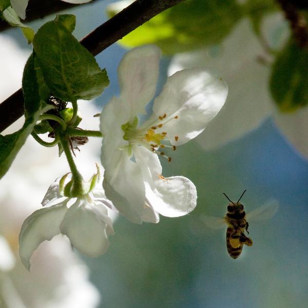 Dag_044_2012-maj-25_6618.jpg
