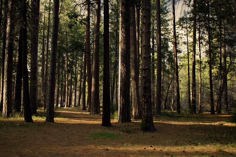 Yosemite woods IMG_4074.jpg