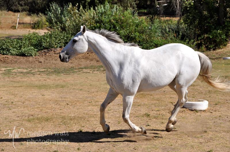 EB&Horses-088.jpg