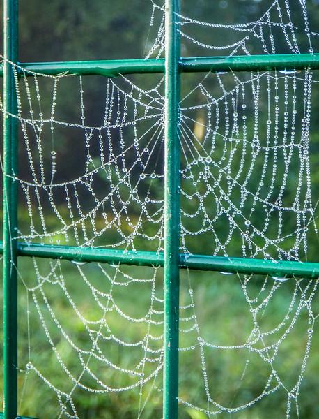 spiderwebonthefence.jpg