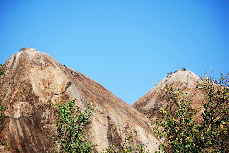 Serengeti (120).JPG