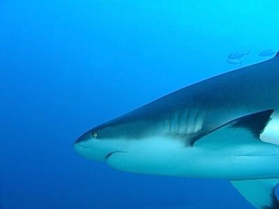 Scuba Diving in  Western Caribbean