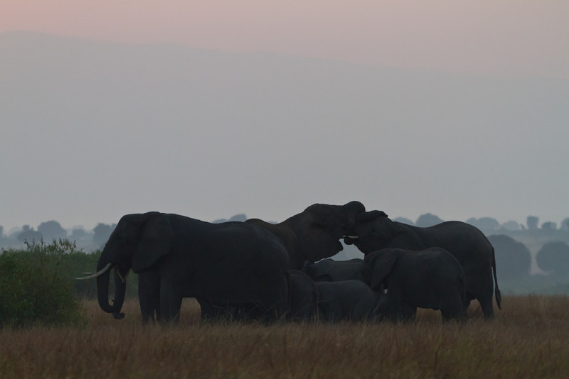 Elephants / Elefanten (Queen Elizabeth NP)