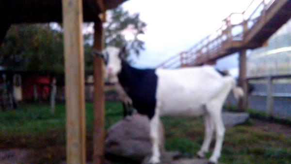 Videos from Abbott Farms - 2016