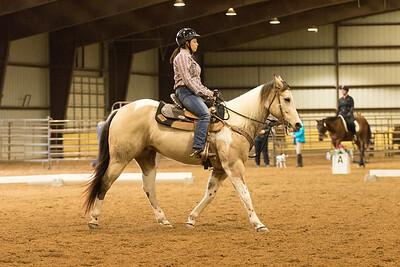 Horse 569