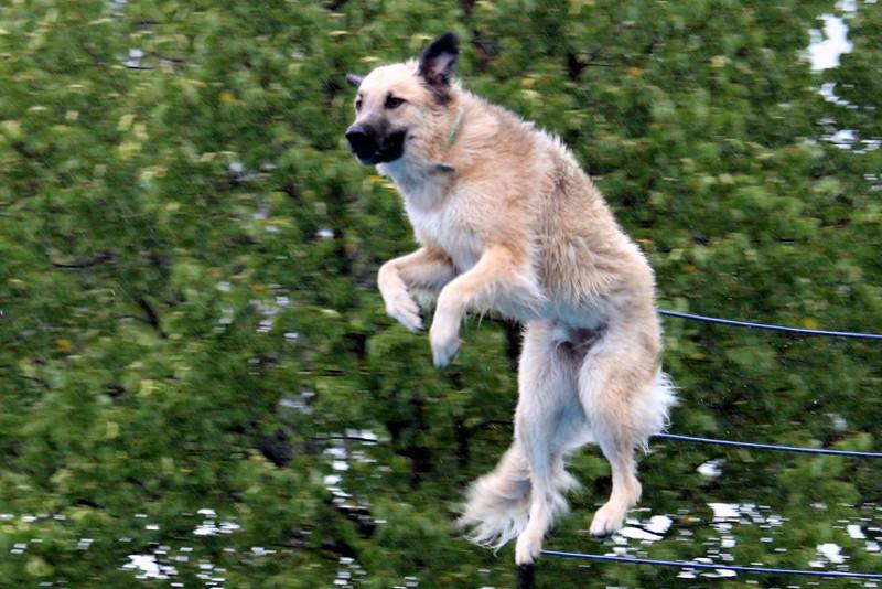 2015.8.7 Winnebago County Fair Dock Dogs (30).JPG