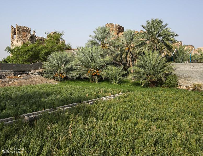 FE2A1285-Ibra-Alminzifah- Oman.jpg