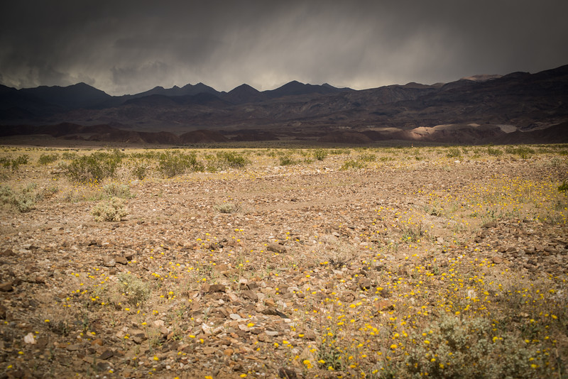 Death Valley rain-236.jpg