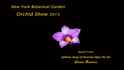 NYBG Orchid Show 2013