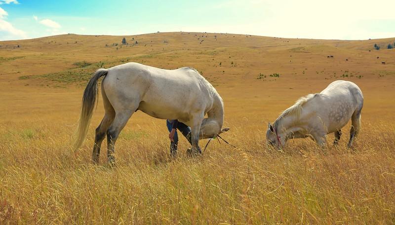 Horses 36.jpg