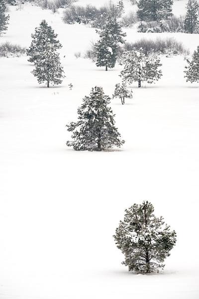 Winter camping at Camas Meadow-200.jpg