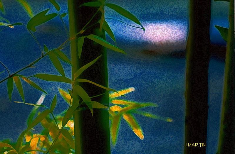 bamboo shadow 8-17-2007.jpg