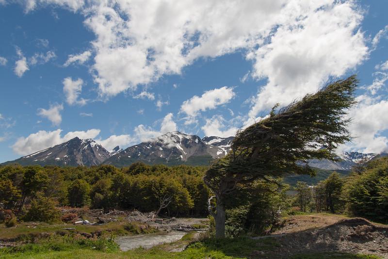 Wind shaped tree, Tierra Del Fuego