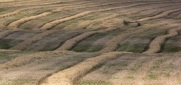 Põllud ja heinamaad - Fields