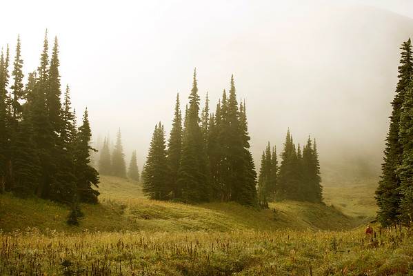 Northern Loop Route, Mount Rainier National Park