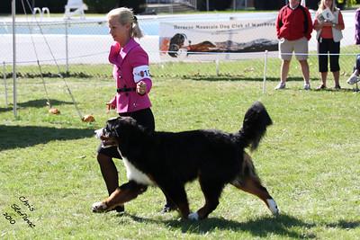 Best Puppy BMDCW 2010