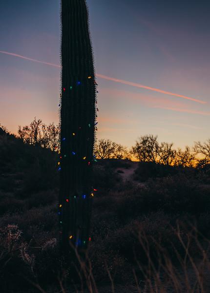 HolidayMini-SunshynePix-1197.jpg
