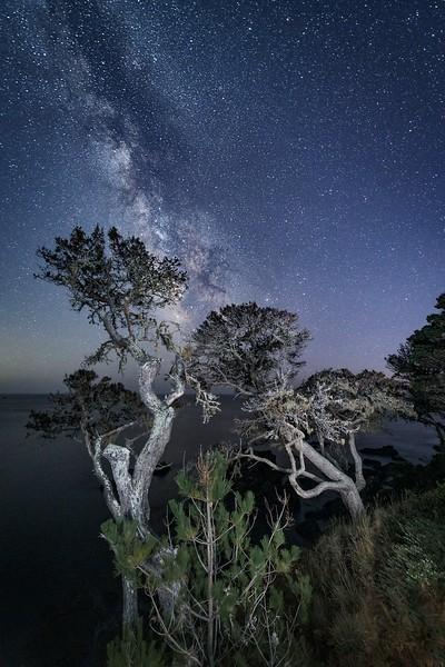 Bluff Tress & Milky Way (Vertical)