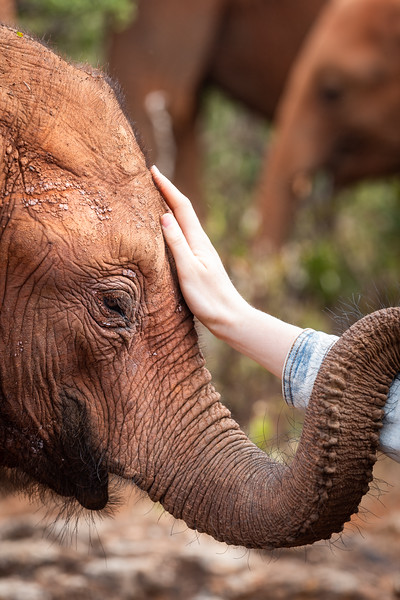 David Sheldrick Wildlife Trust - Nairobi, Kenya