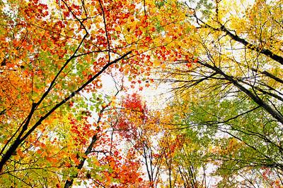 Autumn Colour in Trees, Shrubs & Perennials