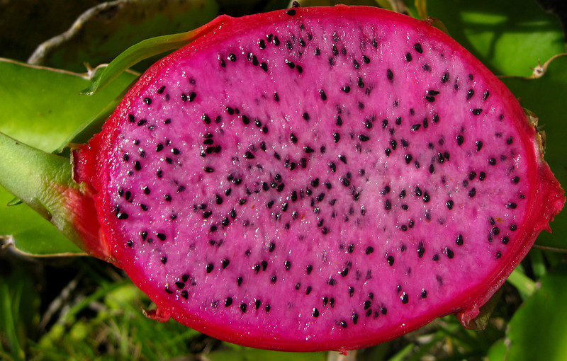 Dragonfruit ~ Incredibly delicious and lightly sweet, the glowing pink Dragonfruit. This fruit comes from a cereus cactus. Very tasty, and also expensive - in China Town you'll find them for $5 each. Definitely worth tasting.  North Shore of O'ahu, Hawai'i