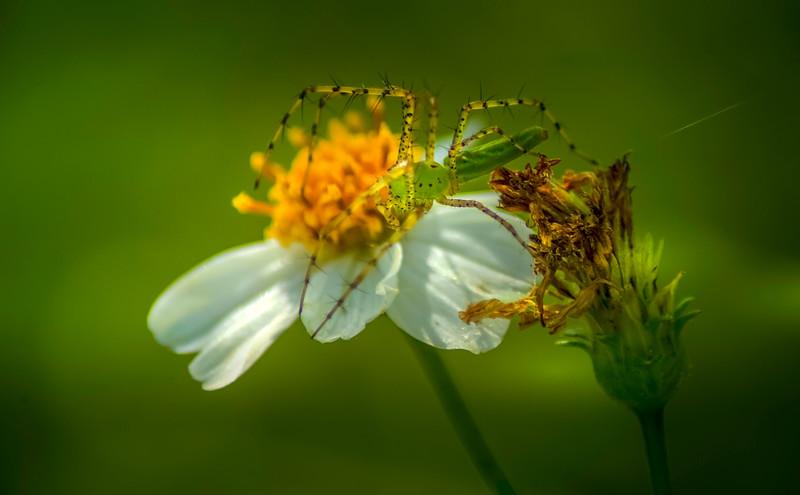 Spiders-Arachnids-054.jpg