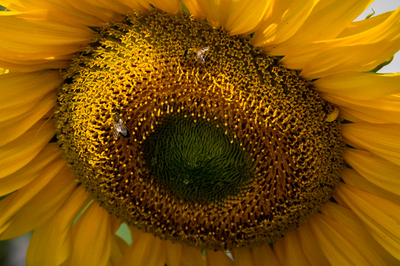 June 25 - Sunflower snack.jpg
