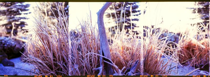 Hoar Frost | November 2007