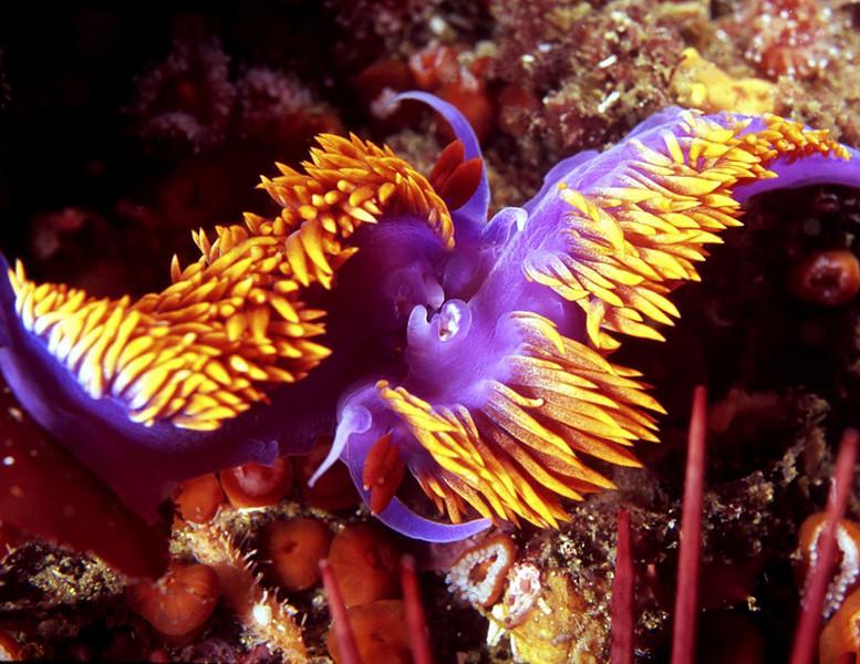 nudibranch love.jpg