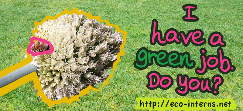 Eco-Interns-2012_GreenJob2_web.jpg