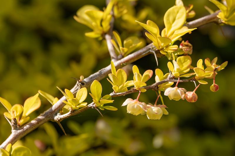 Nana's garden 24 Apr 2020-22.jpg